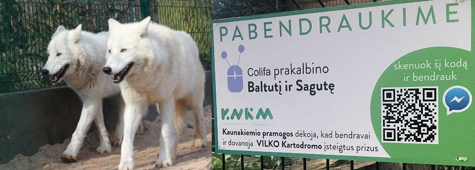 gyvūnai bendrauja per messenger